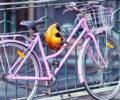 Sécurité en vélo : équipements de sécurité pour les cyclistes urbains