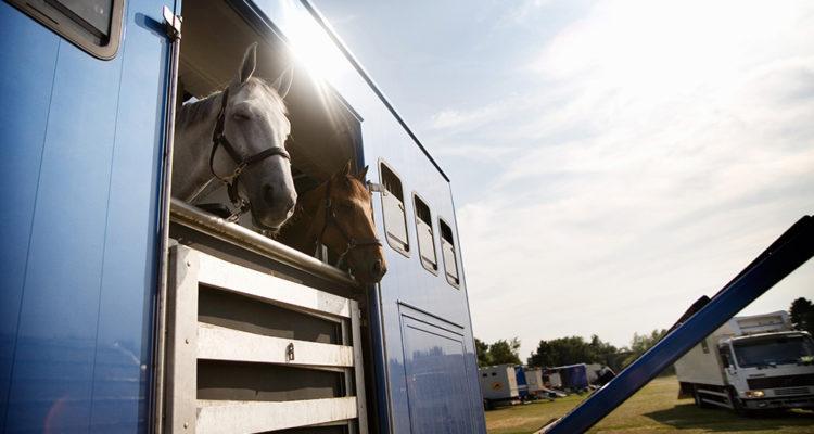 transport des chevaux